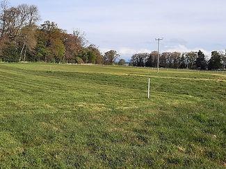 dressage field.jpg