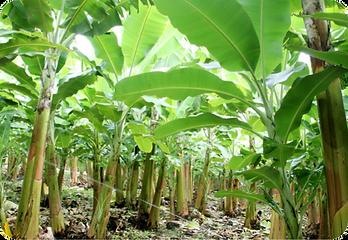 Sustentabilidade-Frutecon.png