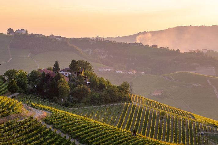 langhe wine geneva piemonte italy.jpg
