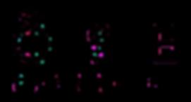 OSE_logo_transparent.png