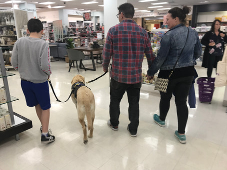 Autism dog gives parents back their confidence