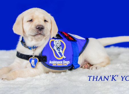 Gratitude from the K litter