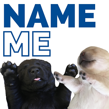 NAME THE PUPPY.png