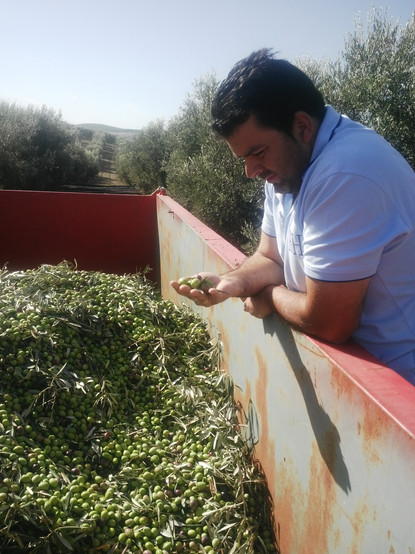 olive-producer