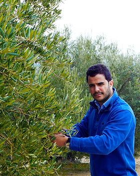 luis-olive-tree.jpg