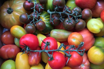 heritage-tomatoes