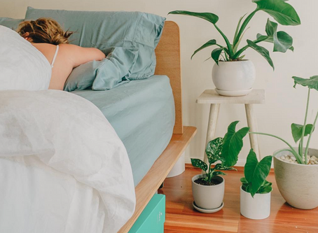 Koala Timber Bed Base Review