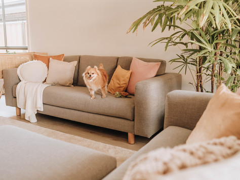 Koala Lounging Sofa Review