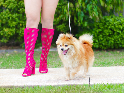 Fuchsia Knee High Boots