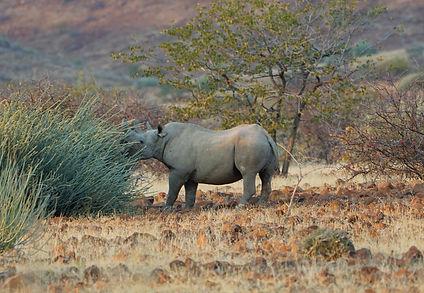 Black-RhinoWEB.jpg