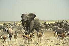 Crazy-elephant4WEB.jpg
