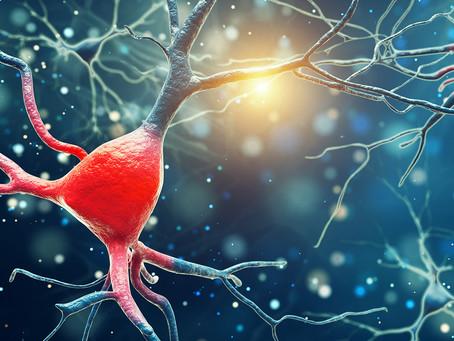 Estudo indica nova forma de pensar o papel da dopamina