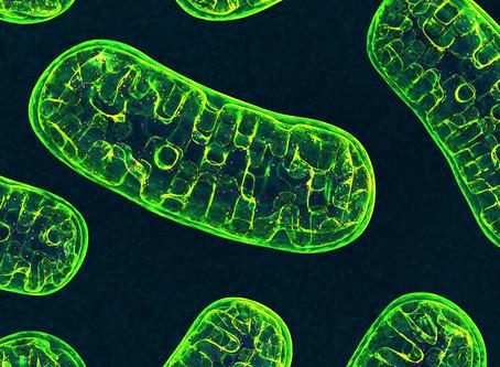 Suplementação com análogo da vitamina B3 pode melhorar a imunoterapia do câncer