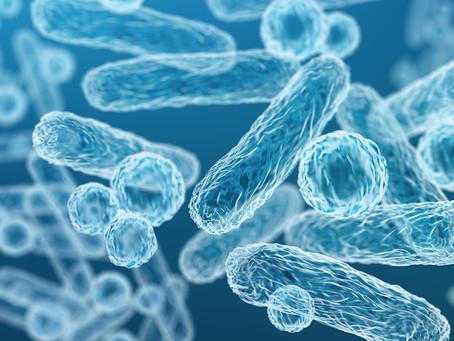 Um microbioma idoso pode afetar negativamente a cognição de jovens