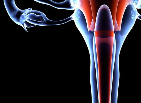 Reconstrução uterina por bioengenharia suporta gestação normal