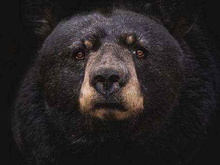 Seres humanos podem hibernar como os ursos?