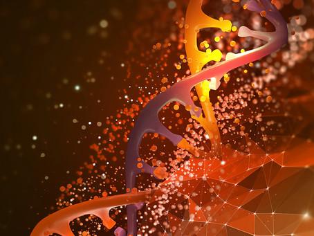 Integridade de rede de genes pode evitar cardiopatias congênitas