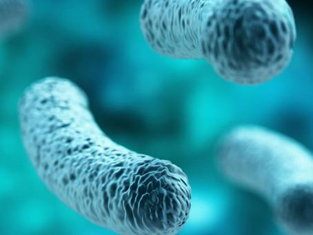 Como a relação entre microbioma e genética pode afetar a memória?