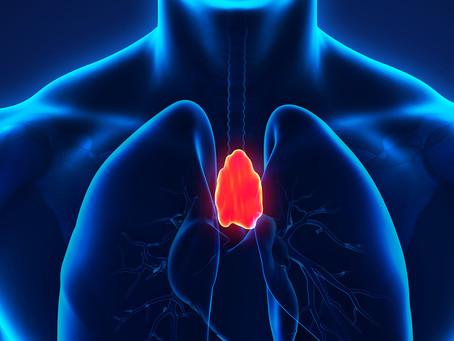 Pesquisadores conseguem desenvolver timo humano funcional