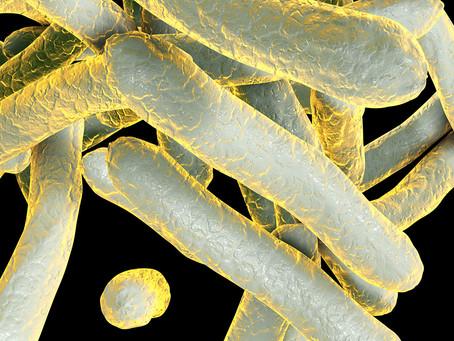 Imunobióticos podem ser estratégia útil contra a resistência aos antibióticos?