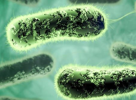 Vacina contra bactérias flageladas pode gerar proteção contra inflamação intestinal