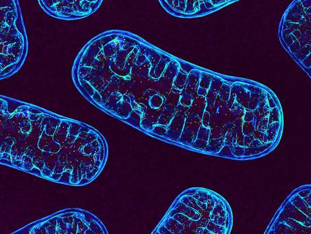 Diurético aumenta a longevidade em estudo por efeito mitocondrial