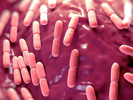 Estudo identifica potencial benéfico dos lactobacilos no tratamento do diabetes tipo 2