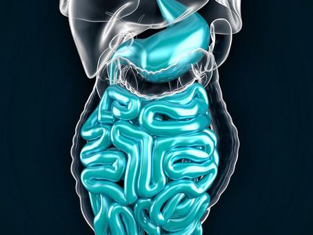 Estudo propõe nova abordagem do diabetes tipo 2 a partir do intestino
