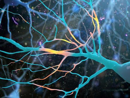 Descoberta nova célula imune que pode reparar o tecido neuronal