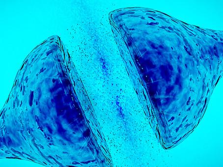 Reprogramação de células gliais em neurônios funcionais recebe novo impulso