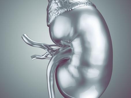 Bioimpressão 3D de rins pode ser saída para a escassez de órgãos para transplante