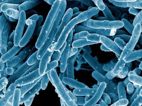Novo protocolo para tratamento de tuberculose MDR em 6 meses