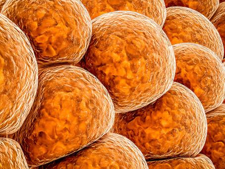 Gordura marrom detectável relacionada a menor risco de doenças