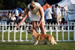 Split 4 summer night dog show