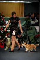 Winter dog show, Best Junior