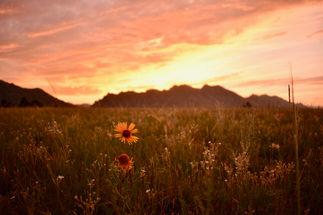 Flatirons Vista Sunset #1