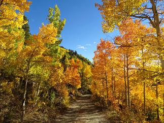 Autumn Aspen Alley