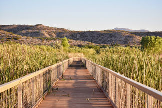 Bosque Boardwalk
