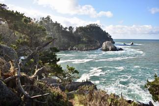 Lobos Cove
