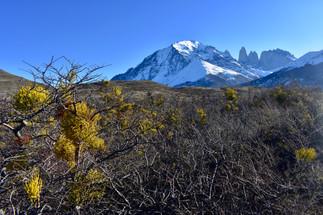 Los Torres Mid-Winter