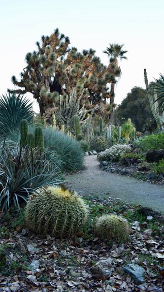 Cactus Tableau