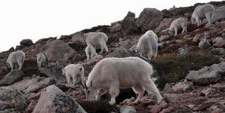 Migration towards Last Light on Mt. Evans