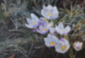 SE_CrocusFlowers.jpg