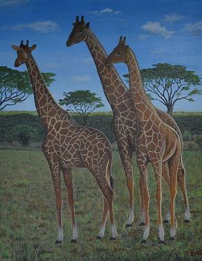 JG_Giraffes.jpg