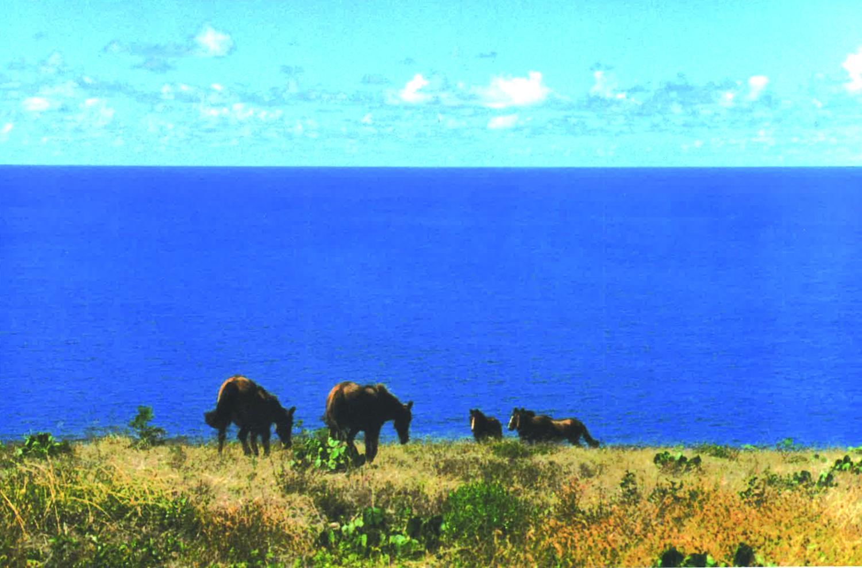 10 ISLA DE PASCUA(イサレデ・パスクア)=イースター島