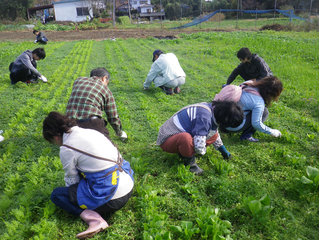 身体を還元する食材「ひふみ農園見学会」