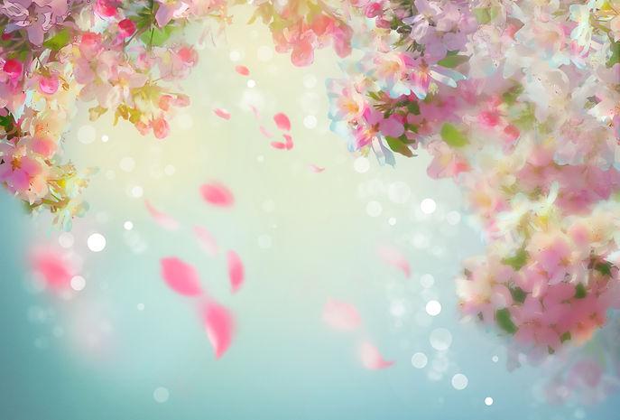 Spring Cherry Blossom Wedding Background