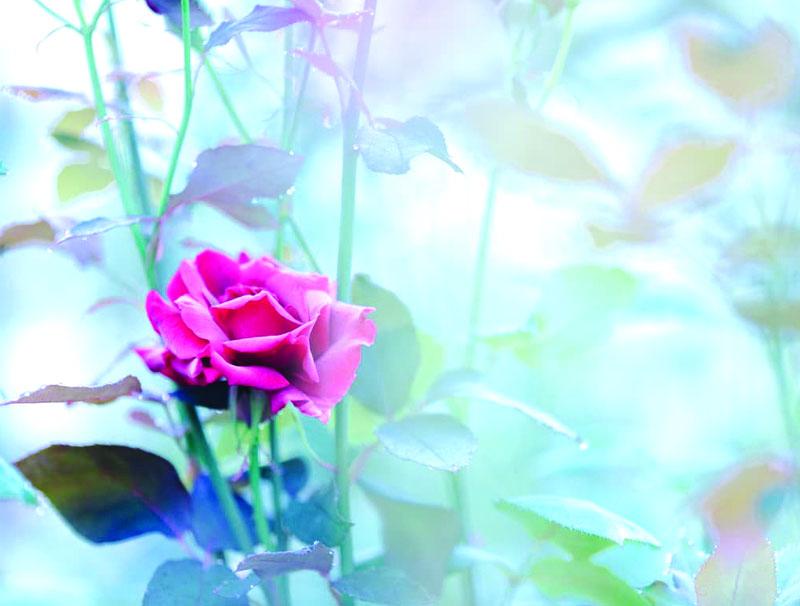 バラの香りのミックスジャム