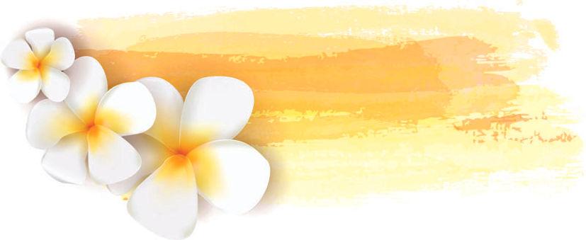 縮小 黄帯のプルメリアイラスト-2.jpgオルプ・ピュア・ゴールドソープ オーガ