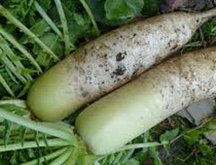 無農薬大根は甘くて美味しい